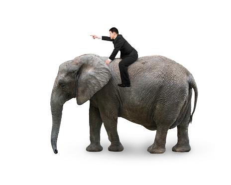 सपने में हाथी की सवारी, सपने में हाथी की सवारी करना, सपने में हाथी की सवारी देखना, सपने में हाथी का सवारी करना, सपने में हाथी पर सवारी करना, सपने में हाथी पर सवार करना, सपने में हाथी पर बैठना, सपने में हाथी पर बैठना कैसा होता है,  सपने में हाथी पर बैठे हुए देखना, सपने में हाथी पर चढ़ना, सपने में हाथी पर बैठने का मतलब, sapne me hathi ki sawari karna, sapne mein hathi ki sawari dekhna,