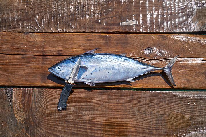 सपने में मछली मारना, सपने में मछली मारना देखना, सपने में मछली मारते हुए देखना, सपने में मछली मारने का मतलब, सपने में मछली मारने से क्या होता है, सपने में मछली मारने का अर्थ, सपने में मछली को मारना, सपने में नदी में मछली मारना, सपने में मछली मारना क्या होता है, सपने में मछली मारने का क्या मतलब है, सपने में मछली मारने का मतलब क्या होता है, सपने में मछली को मारते हुए देखना, सपने में मछली, सपने में मछली को देखना शुभ है या अशुभ, सपने में मछली दिखने का संकेत, सपने में मछली को देखना, सपने में मछली को काटना, सपने में मछलियों को देखना, सपने में मछली, सपने में मछली का दिखाई देना शुभ है या अशुभ, sapne me machli marna,  sapne me machli marte dekhna,  sapne me machli marte hue dekhna,  sapne me machli mari dekhna,  sapne mein machli mar na,  sapne mein machli marte dekhna,  sapne me mara machli dekhna,  sapne me machli marna dekhna,  sapne me machli ko marna,  sapne me machli ko marte dekhna,  sapne me mari hue machli dekhna,  sapne me fish marna,  sapne mein machli marte hue dekhna,  sapne mein machli marna,  sapne mein machli marte dekhna,  khwab mein machli marne ki tabeer,  sapne mein mare hue machli dekhna,  sapne mein mari machli dekhna,  sapne mein machli ko marna,  sapne mein machli mar na,  sapne mein machli ko marte hue dekhna